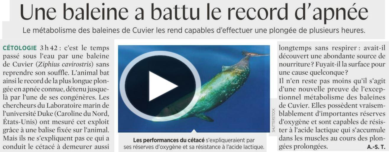 Baleine record apnee 3h42 s a nov 2020